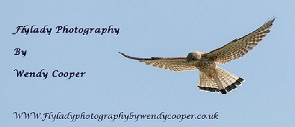 Wendy Cooper - Artist Website